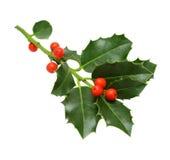 查出的圣诞节绿色霍莉 免版税库存照片