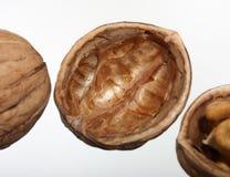 查出的坚果壳s核桃白色 免版税图库摄影