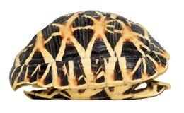 查出的壳乌龟 免版税库存图片
