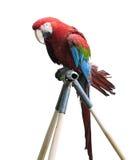 查出的大五颜六色的金刚鹦鹉鹦鹉 免版税库存照片