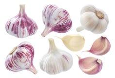 查出的大蒜 整个大蒜、在白色背景和丁香隔绝的一段 库存图片