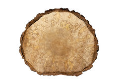 查出的对象 特写镜头桦树锯切开了大与在白色的吠声 库存图片