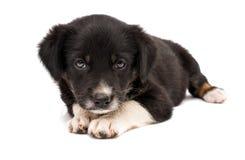 查出的小狗 免版税库存照片