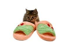 查出的小猫坐的拖鞋白色 免版税库存照片