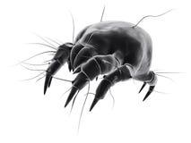 查出的小蜘蛛 免版税图库摄影