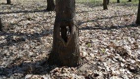 查出的徽标爱对象符号结构树变形向量 走在森林我发现了在树的一个孔以心脏的形式 免版税库存照片