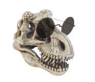 查出的恐龙佩带的太阳镜 免版税库存图片