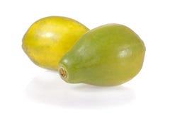 查出的成熟番木瓜 免版税库存图片