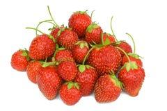 查出的成熟草莓白色 图库摄影