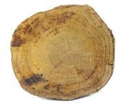 查出的木头 库存照片