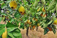 查出的柑橘 免版税库存照片