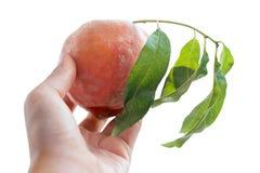 查出的桃子 免版税库存图片
