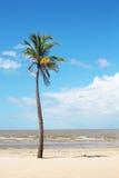 查出的棕榈树 库存图片
