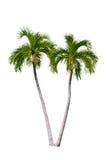 查出的棕榈树 库存照片