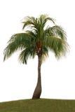 查出的棕榈树 免版税图库摄影
