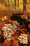 查出的森林采蘑菇白色 库存图片