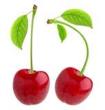 查出的樱桃 与在与裁减路线的白色背景隔绝的叶子的一棵红色樱桃 免版税库存照片