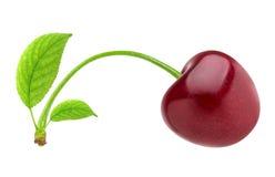 查出的樱桃 在与裁减路线的白色背景隔绝的一棵红色樱桃 库存图片