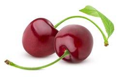 查出的樱桃 在白色背景的两棵新鲜的樱桃 库存图片