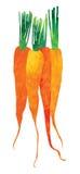 查出的水彩红萝卜例证 库存图片