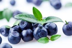 查出的浆果蓝莓离开白色 库存照片
