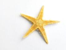 查出的海星海星白色 免版税库存图片
