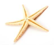 查出的海星白色 库存图片