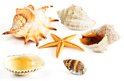 查出的淡菜贝壳海星 免版税库存照片