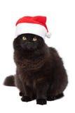 查出的猫圣诞节 免版税库存照片