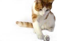 查出的猫 库存图片