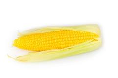 查出的玉米棒玉米 免版税库存图片