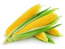 查出的玉米穗 库存照片