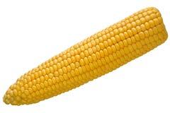 查出的玉米 库存图片