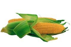 查出的玉米 免版税库存照片