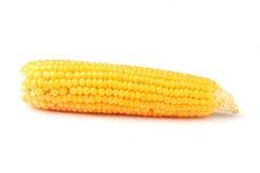 查出的玉米 库存照片