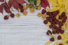 查出的秋天美好的框架离开实际白色 免版税库存照片