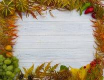 查出的秋天美好的框架离开实际白色 图库摄影