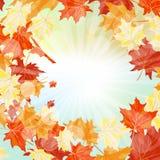 查出的秋天美好的框架离开实际白色 库存照片