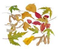 查出的秋天背景离开白色 免版税库存照片