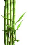 查出的竹子 库存图片
