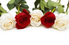 查出的红色和空白玫瑰 免版税图库摄影