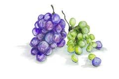 查出的红色和绿色葡萄果子 向量例证