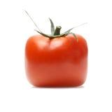 查出的红色蕃茄 免版税图库摄影