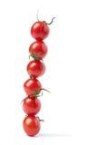 查出的线路蕃茄 免版税库存照片