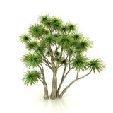 查出的结构树白色 免版税库存图片
