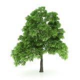 查出的结构树白色 库存图片
