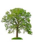 查出的结构树 库存照片