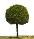 查出的绿色结构树 库存图片