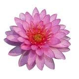 查出的美好的粉红色 图库摄影