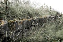 查出的草向白色扔石头 免版税库存照片